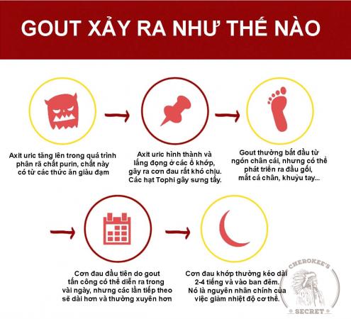 cơ chế bệnh gout